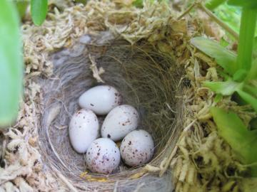 フラワーバスケット 鳥の巣?