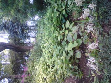 shead garden