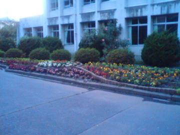 八戸小学校花壇整備しました