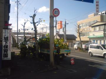 八戸市の街路樹剪定