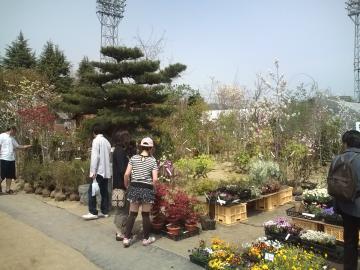 八戸市緑化まつり終わりました。
