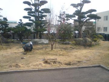 N邸梅の植栽