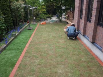芝生の張り替えです。