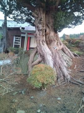 岩の上に座る樹木